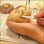 Photograph showing step 4 of how to make a carved turnip head