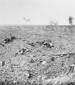 Photograph of No Man's Land in front of the Canadian lines, the Somme, October 1916