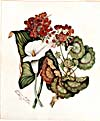 [Geranium and Lily] Watercolour by Susanna Moodie, 1872